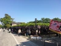 岡崎公園の藤棚