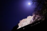 月としだれ桜と