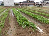 農福自然栽培塾 収穫