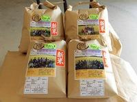 稲刈り終わって自然栽培新米発売中