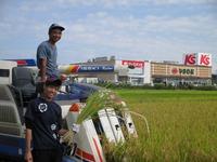 自然栽培米稲刈り 新米販売開始です!
