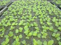 3月5日 環境サロン 自然栽培勉強会