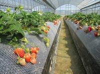 春に向けての自然栽培野菜たち
