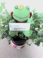 oyashua