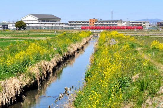 春の鹿乗川