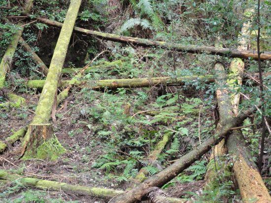 鳥川(とっかわ)ホタルの里山歩きイベントその2