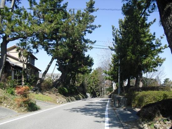奥まで続く『松並木』(藤川小学校フォト㉒)