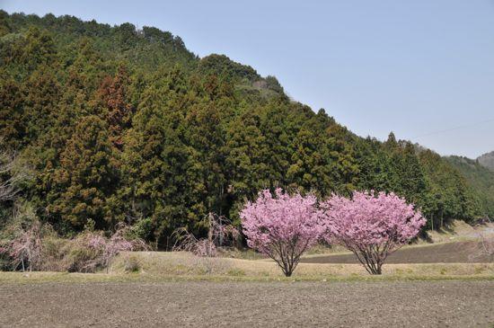 鳥川川(とっかわがわ)の春