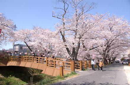 岡崎の風景-伊賀川の桜