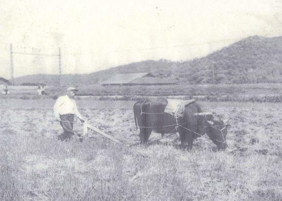 藤川むかし写真館⑫昭和30年代の農耕風景