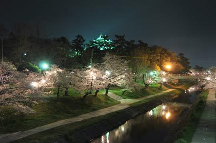岡崎の夜ざくら