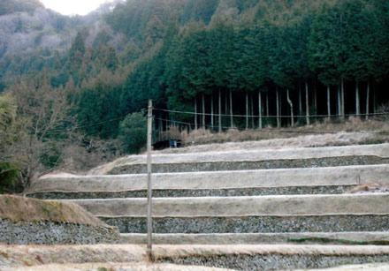 里山(棚田と背景林)