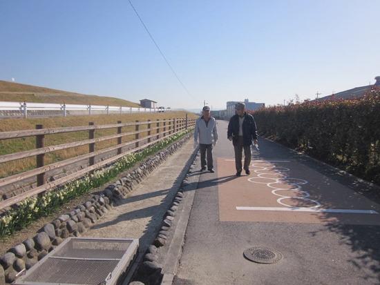 なのはな遊歩道の水仙(2)