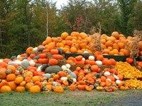 かぼちゃだらけ