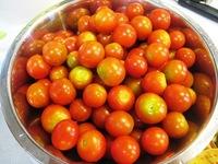 今年のミニトマト