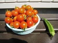 まだまだ続く…トマト