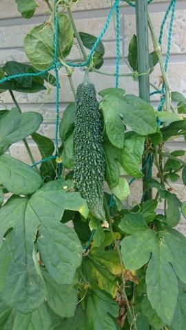 P-BASEスペシャル家庭菜園
