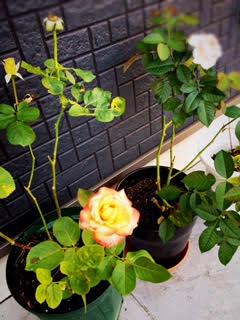 P-BASE清水店で育ている花
