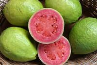 岡崎市ベトナム料理フォーコムフォーで南国の果物グアバを。