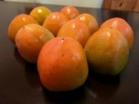 柿の収穫♪