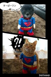 スーパーマン!!!