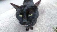 黒猫の里親を募集します