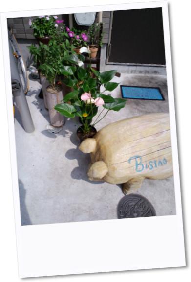 ビストロの花