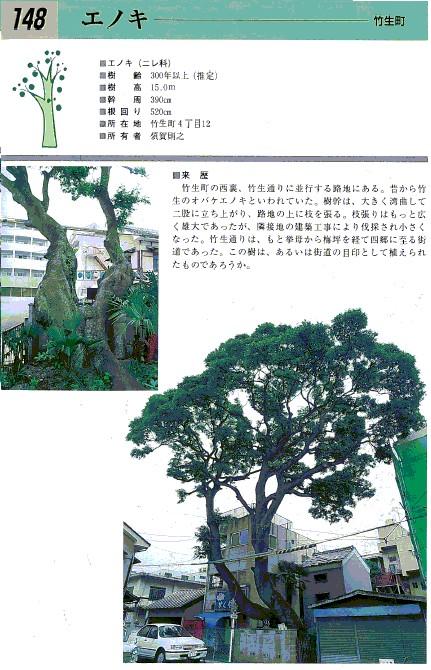 豊田の名木