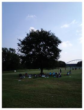 大きな樹の下がオススメ