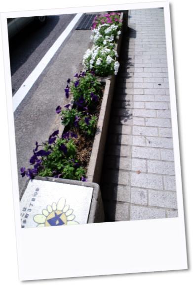 豊田の植え花