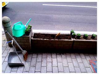 ペチュニアを植える