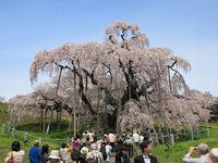 日本人の良さ~5年前と大きく変わったのは?(再掲)