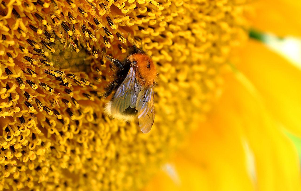 子どもの花粉症~身の回りがきれいすぎ?