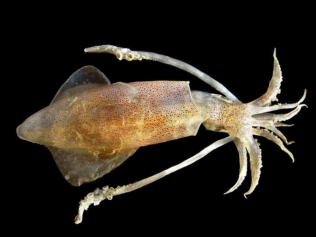 頭足類シンポジウム~イカはどっちが上なの?