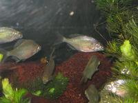 めずらしい生き物を見ることができる場所~碧南海浜水族館
