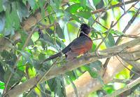 名古屋好きの珍鳥~どんな鳥?