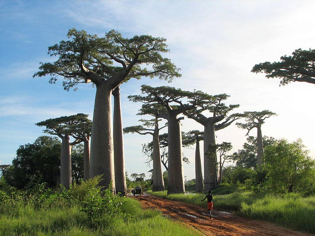 マダガスカル~消える命の森