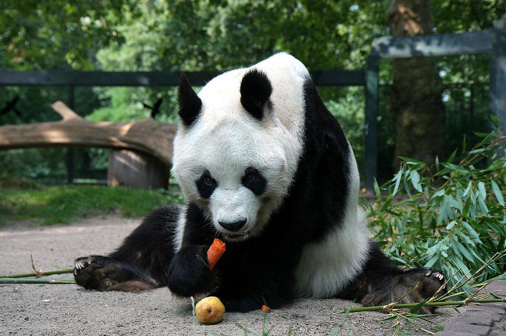 パンダにだまされちゃった!?