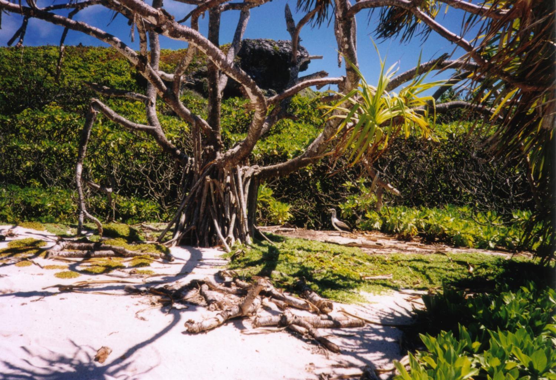 世界遺産のヘンダーソン島~あれがたくさん流れ着いちゃった!?