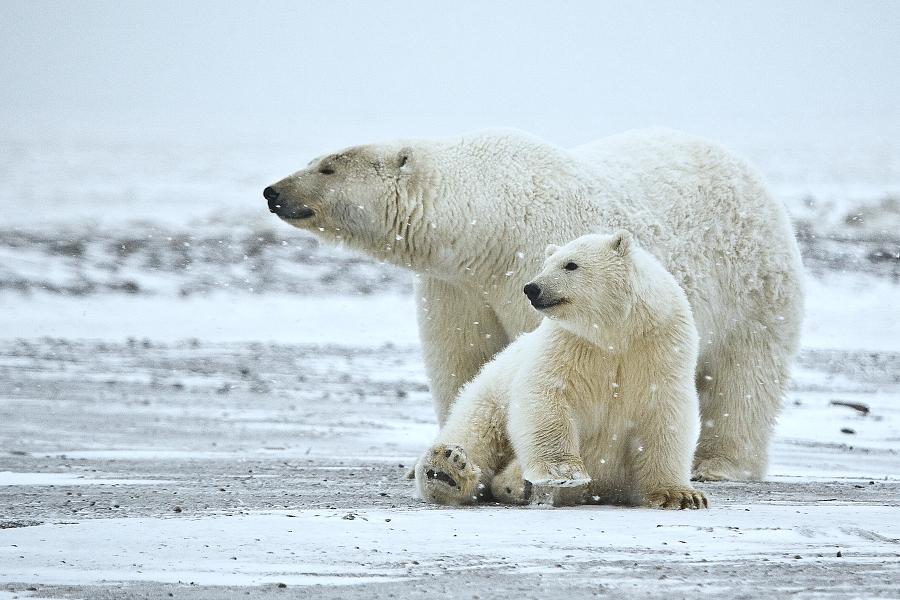 こんどは北極~いったいどんな所なの?