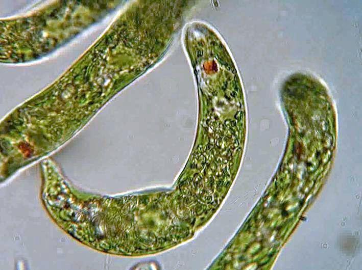 ミドリムシバス~藻は石油を超える!?