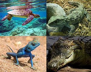 爬虫類~地球の歴史を振り返ってみよう