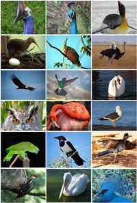 鳥類~鳥ってどんな生き物?
