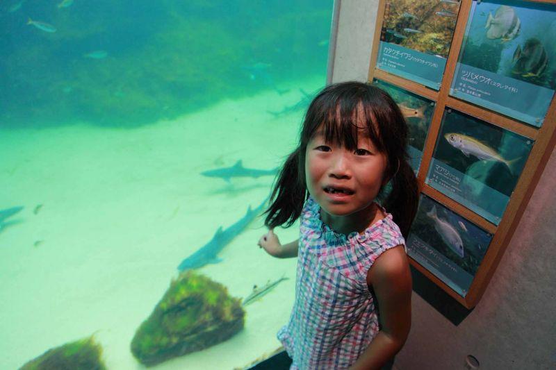 サメを食べちゃあいけません!~その3