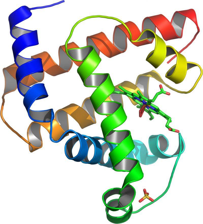 ゲームで解明、タンパク質!(再掲)
