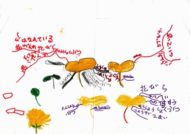 みんなのマインドマップ~種子植物