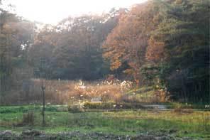 豊田の湿地が!!