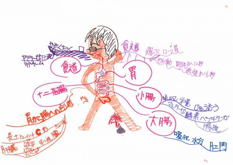 みんなのマインドマップ~消化管(6年生)