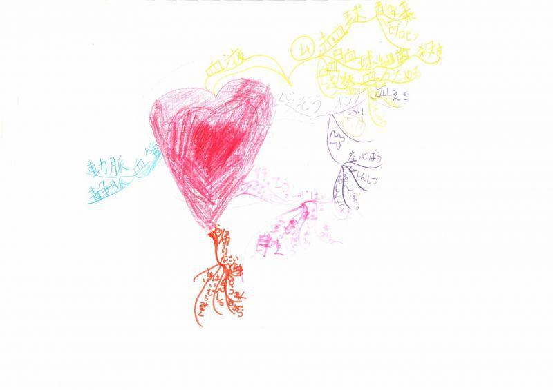みんなのマインドマップ~心臓と血液(小学4年生、5年生)