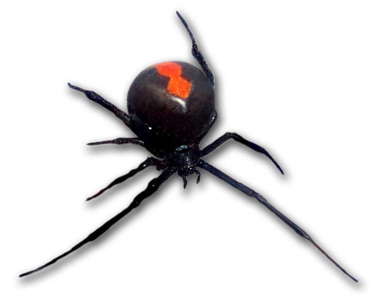 クモ 赤い 小さい
